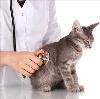 Ветеринарные клиники в Перемышле